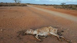 Droogte Columbia telt 30.000 dode dieren